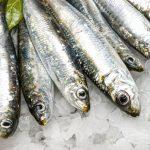 Le proprietà delle sardine