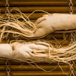 L'Eleuterococco: la radice che stimola e protegge | Pazienti.it