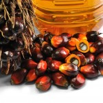 La verità sull'olio di palma   Pazienti.it