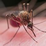 Anche i profumi floreali scacciano le zanzare | Pazienti.it