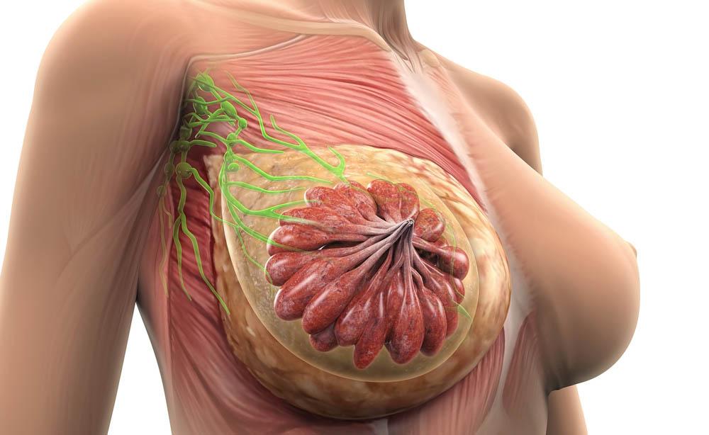 Mastodinia perch il seno pu far male - Sensazione di bagnato prima del ciclo o gravidanza ...