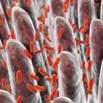 Batteri intestinali e malattie del cervello: come sono correlati? | Pazienti.it