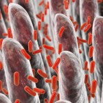 Celiachia: alcuni batteri intestinali potrebbero determinare la malattia   Pazienti.it