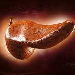 Le ultime scoperte su pancreas e diabete   Pazienti.it