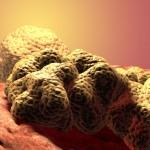 Test genetici per prevenire il tumore al seno | Pazienti.it