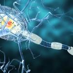 La dieta del 'digiuno': un prezioso aiuto per la sclerosi multipla | Pazienti.it