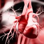 Al cuore delle malattie cardiovascolari: comprenderle per prevenirle | Pazienti.it