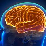 Le cause delle convulsioni | Pazienti.it