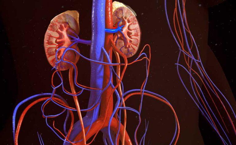 Azotemia e creatinina alte: attenzione alla salute dei reni | Pazienti.it