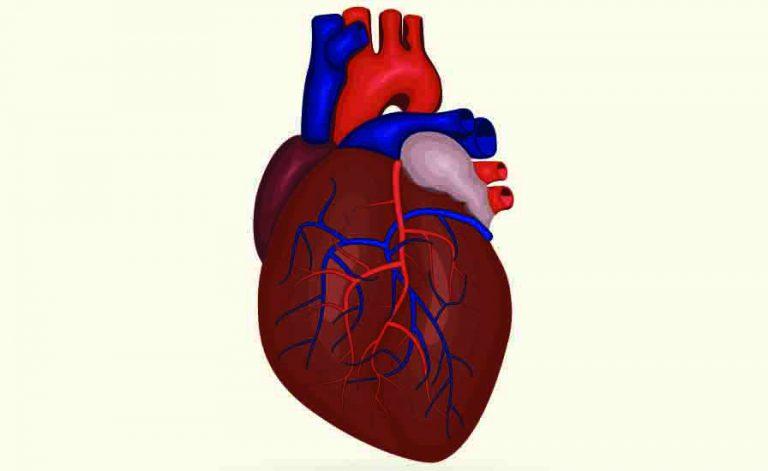 Aritmie cardiache: quando il cuore batte in modo disordinato   Pazienti.it