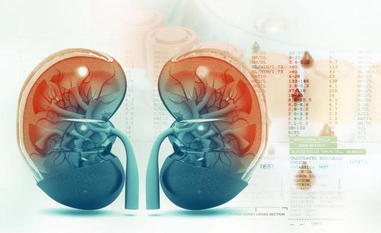 Malattia renale cronica: i fattori di rischio | Pazienti.it