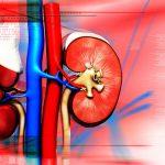Insufficienza-renale1-150x150 | Pazienti.it