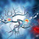 Sclerosi multipla: la speranza è data dalle cellule staminali neurali | Pazienti.it