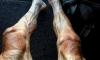 La foto di Pawel Poljanski dopo il Tour de France: cos'è successo alle sue gambe? | Pazienti.it