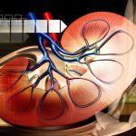 Ipertensione: e se la causa fossero i reni? | Pazienti.it