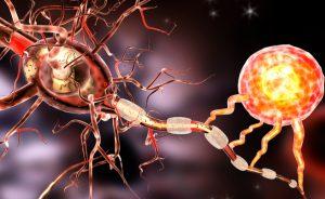 Dalla flora intestinale un batterio per proteggerci dalla sclerosi multipla | Pazienti.it