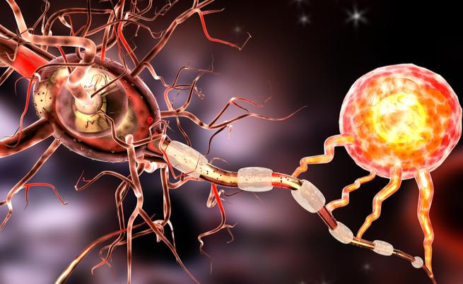 E' un batterio che arriva dall'intestino a proteggerci dalla sclerosi multipla | Pazienti.it