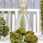 Cannabis ad uso terapeutico: tutte le novità legislative | Pazienti.it