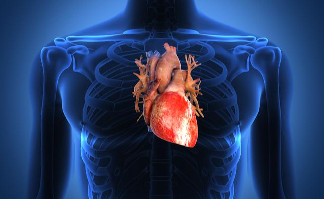 Ceci, i legumi che fanno bene al cuore (e non solo!) | Pazienti.it