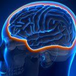 Prevenire la demenza senile: quell'ingrediente segreto (che a volte spaventa) | Pazienti.it