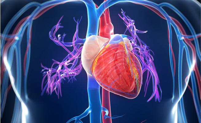 Recupero dopo un infarto: arriva un gel iniettabile | Pazienti.it