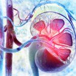 Diabetici: quando la glomerulonefrite danneggia i reni | Pazienti.it