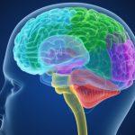 Il vino rosso ripulisce il cervello da scorie e tossine: vero o falso? | Pazienti.it