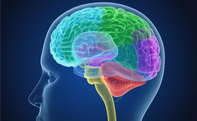 Il vino rosso ripulisce il cervello da scorie e tossine: vero o falso?   Pazienti.it