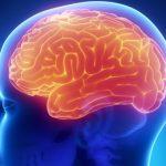 Come cambia la memoria in gravidanza | Pazienti.it