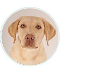 Bürohund Diego