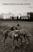 What is a Dog?