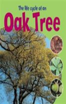 Learning About Life Cycles: The Life Cycle of an Oak Tree