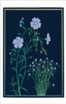 KATE KRASIN BLUE FLAX SMALL BOXED CARDS