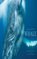 Beautiful Whale