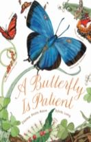 Butterfly Is Patient