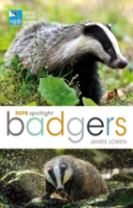 RSPB Spotlight: Badgers
