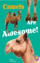 Camels Are Awesome!