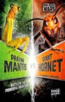 Praying Mantis vs Giant Hornet