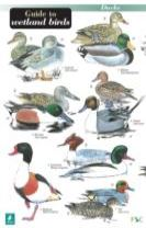 A Guide to Wetland Birds