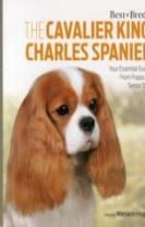 Cavalier King Charles Spaniel Best of Breed