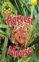 Wildlife Watchers: Harvest Mouse