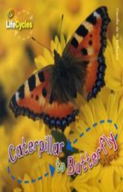 Caterpillar to Butterfly forside
