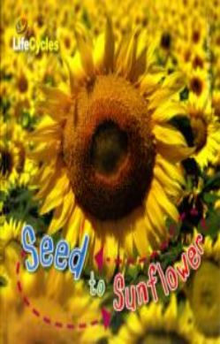 Seed to Sunflower forside