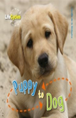 Life Cycles: Puppy to Dog forside