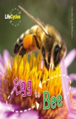Life Cycles: Egg to Bee forside