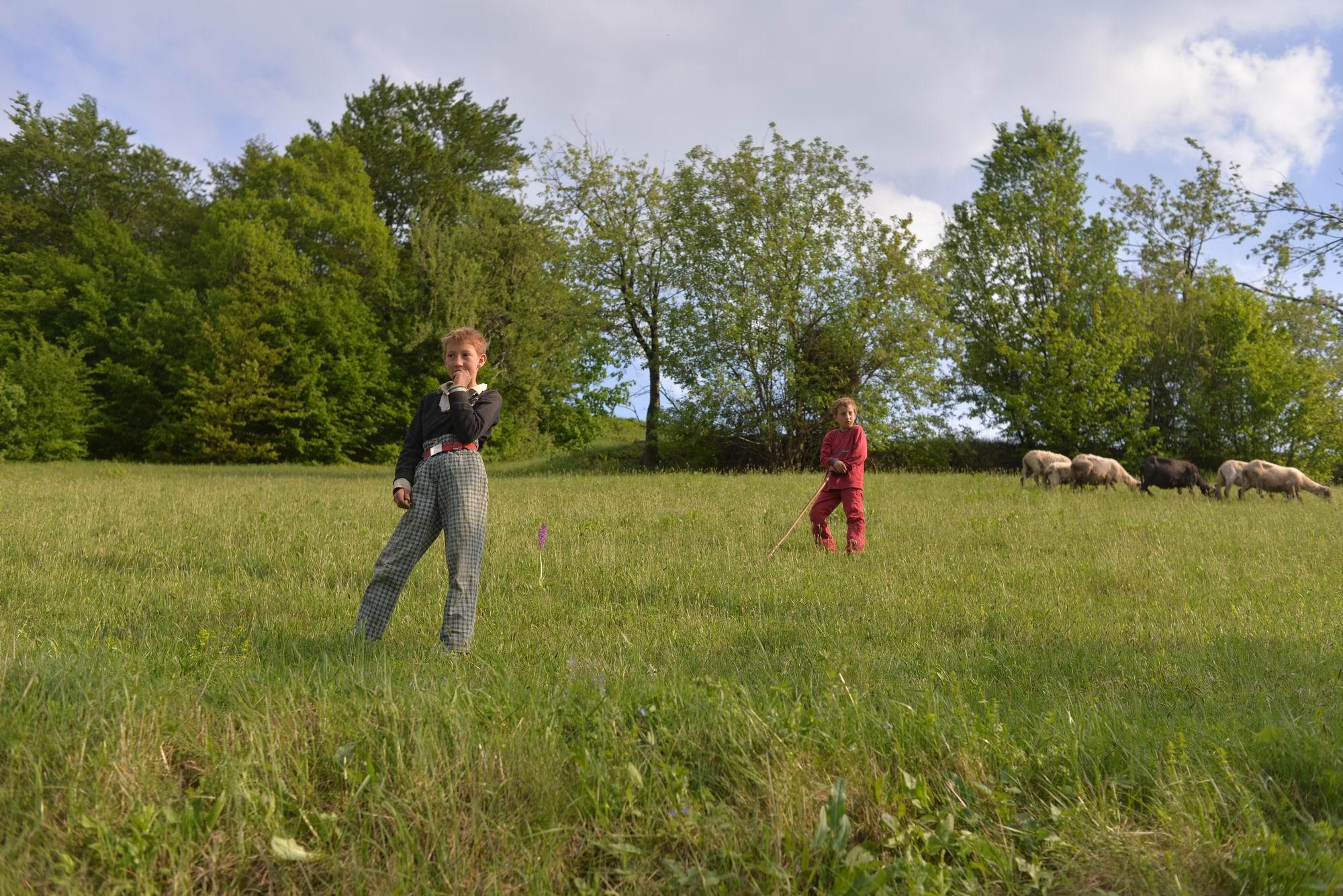 Frații și surorile lui Fănică păzesc oile tatălui lor