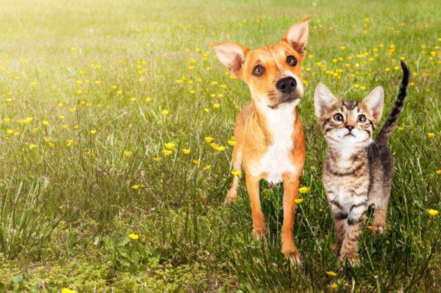 cane e gatto su prato verde
