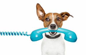 cane-con-cornetta-telefono-rimborsi-bollette
