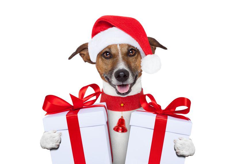 cane-con-regali-di-natale