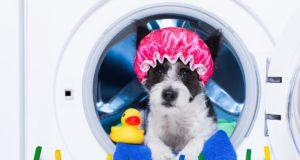 cane con cuffia nella lavatrice come risparmiare